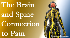 Spengel Chiropractic looks at the connection between the brain and spine in back pain patients to better help them find pain relief.